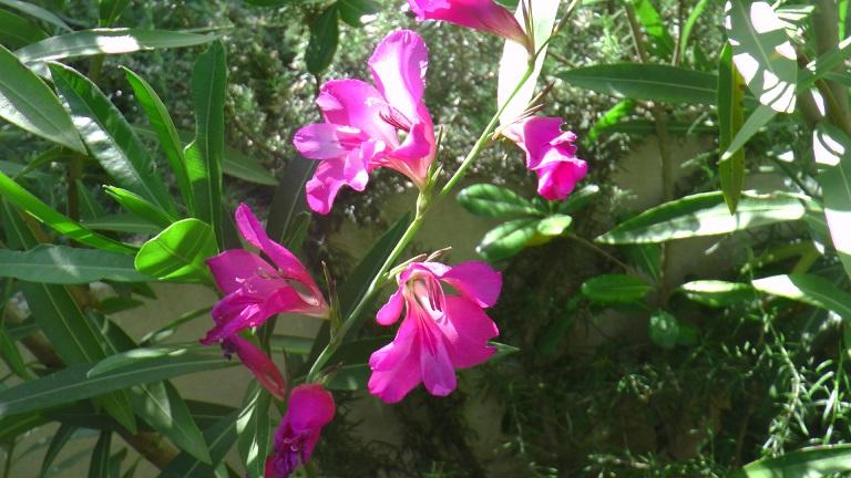 Fleurnommer1.jpg