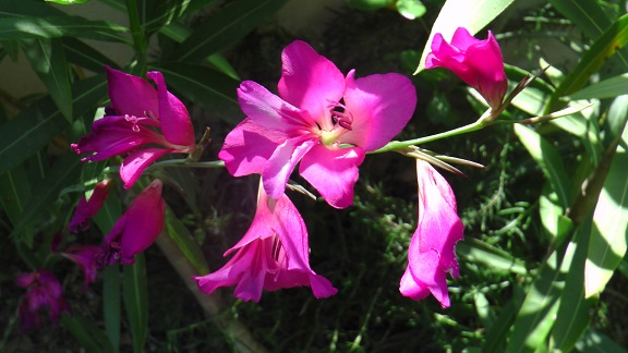Fleurnommer2.jpg